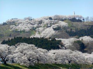 언덕 위에 있는 후나오카 성 공원과 평화의 여신상. 그 언덕에는 1000그루의 벚나무가 있다
