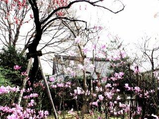 Strolling through the Tenryu-jiTemple garden