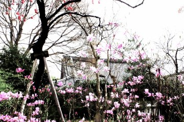 <p>Strolling through the Tenryu-ji&nbsp;Temple garden</p>