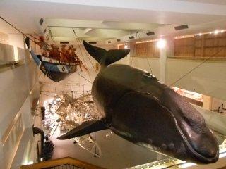 和船と体長15mのセミクジラ