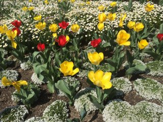 Bunga-bunga musim semi