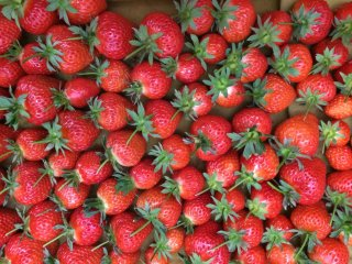 Strawberries for sale in the shop