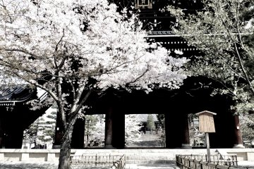 교토 구로다니 사원의 언덕