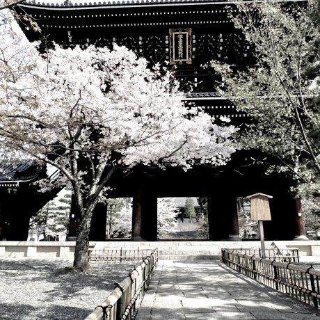 Những ngọn đồi ở đền Kurodani, Kyoto