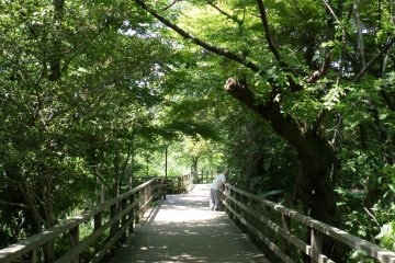 <p>As you move into the forest, the park begins to feel a lot more isolated.</p>