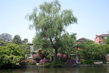 <p>Shakujii Park is full of beautiful plants and trees.</p>