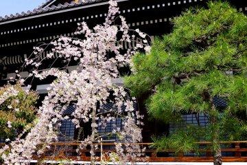 <p>Honno-ji Temple in spring</p>