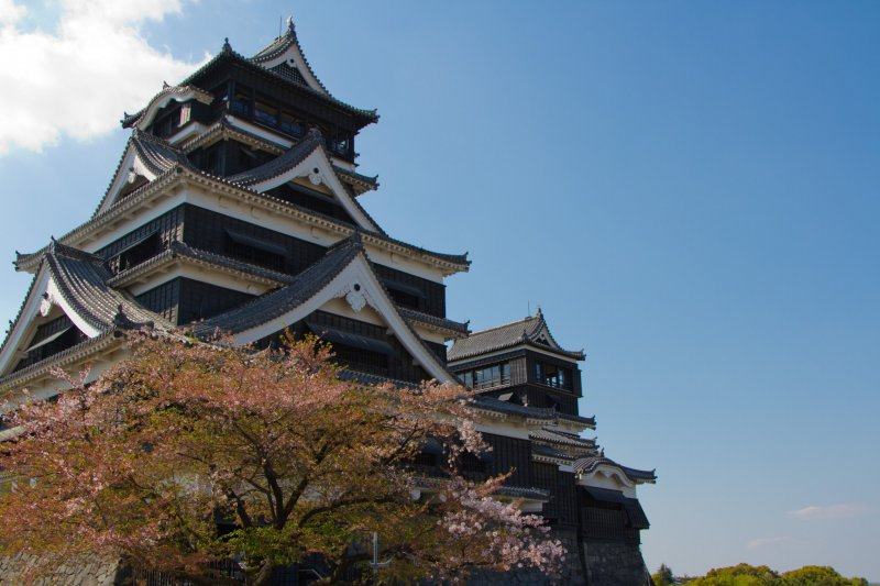 <p>You think about spring in Japan and you usually think of cherry blossoms. So of course there are a few cherry trees right in front of the two majestic towers of the castle keep.</p>