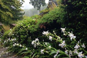 The Flowers of Yoshimine-dera