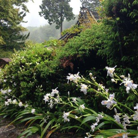 เหล่ามวลดอกไม้ที่ Yoshimine-dera