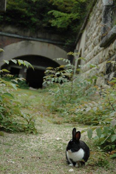 Un lapin devant un bâtiment de l'ancienne usine