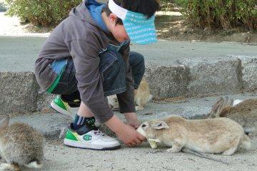 feeding the bunnies