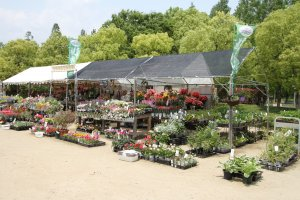 Un kiosque qui vend des fleurs