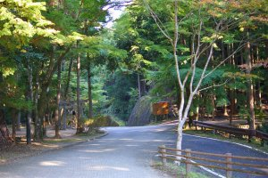 There's something special about the Old Kumano Road.