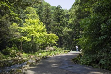 <p>Lush green scenery accompanying the walk to the cave.</p>