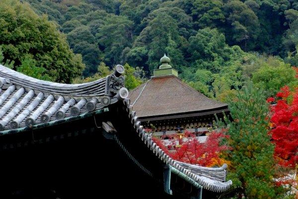 緑の中、燃えるように赤く染まる高台寺の情景
