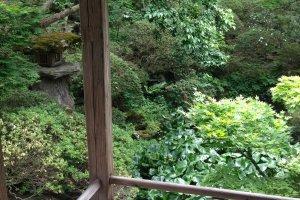 The garden where Issa wrote his famous haiku.