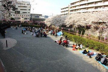 <p>Many people brought blankets and they sat down to eat and drink and enjoy the beautiful scenery.&nbsp;</p>