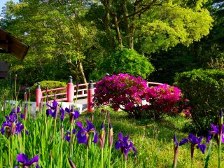 Irises and azaleas