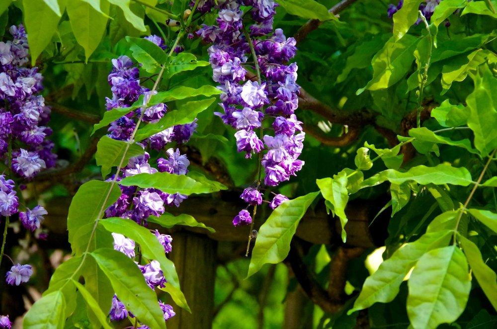 Manyo Botanical Garden - Nara - Japan Travel - Japan Tourism Guide ...