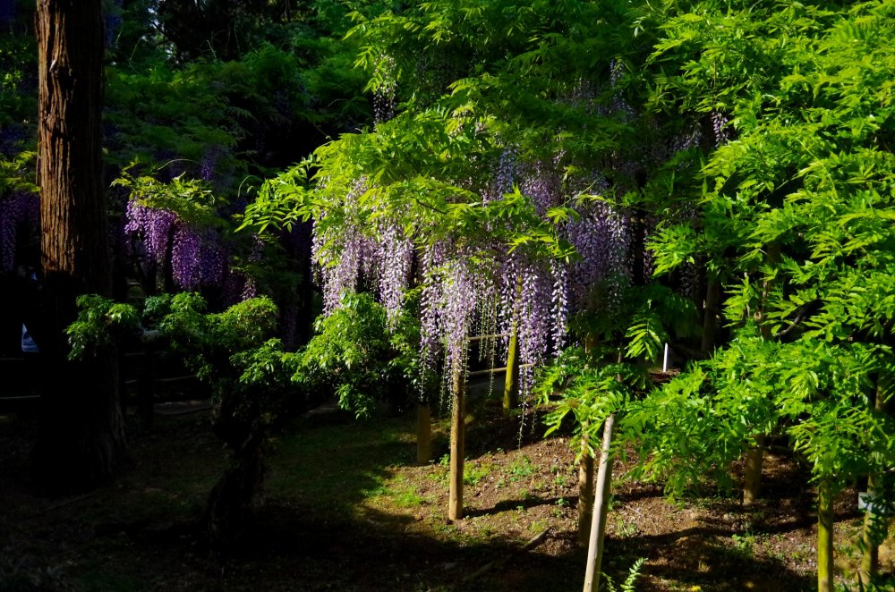 Manyo Botanical Garden - Nara - Japan Travel - Tourism ...