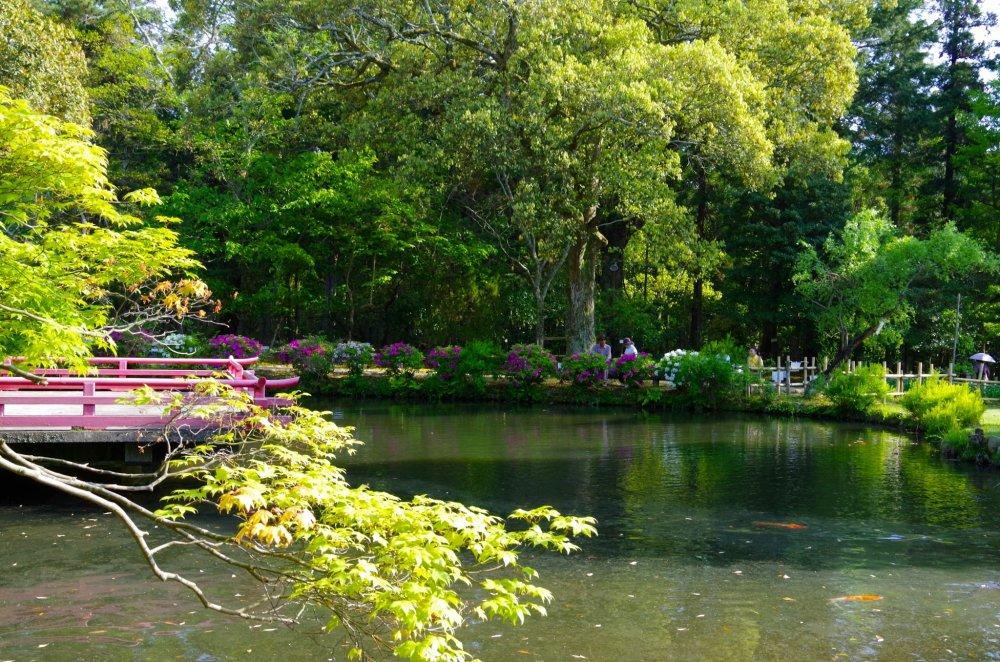 Manyo Botanical Garden - Nara - Japan Travel - Tourism Guide, Japan Map and T...