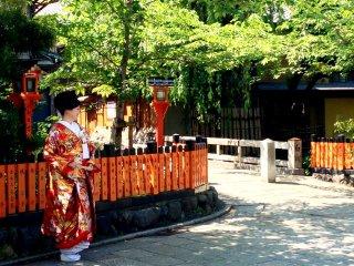 Kimono lộng lẫy nổi bật với cánh cổng cam và hàng cây xanh