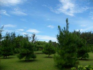 온실 밖 나무와 관목들이 점점이 있는 넓은 들판이 있다