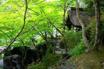 The graceful curve of a shrine roof surrounded by rocks and new maple leaves