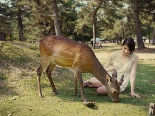 Some deer are really friendly and would let you pet them.
