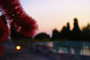Bottle brush