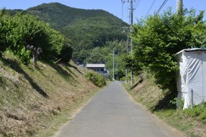 A view of Mt. Hiwada on the walk to Alishan Organic Center and Cafe
