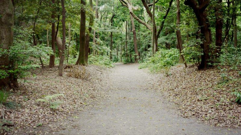 사당으로 가는 평화로운 길