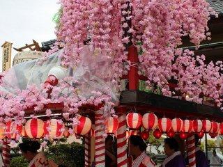 山車を飾る枝垂れ桜は祭りの終了後、見物客に配られる。これは火の用心のご利益があるとされる。昭和31年にあわら温泉が全焼した「あわら大火」への心備えである