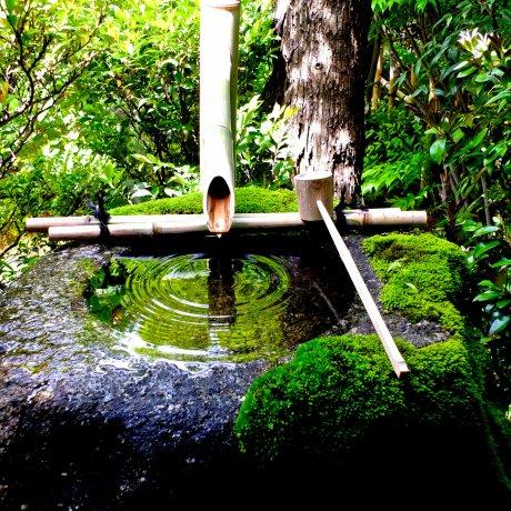 Daiho-in Garden