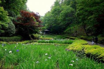 <p>Looking along the iris gardens to the pergola</p>