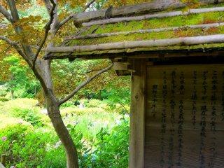 La mousse pousse abondamment sur ce panneau en bois