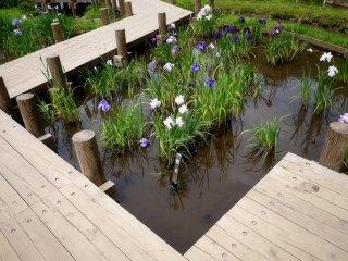 Des parties de l'étang ont des passerelles en bois pour mieux profiter des jardins d'eau