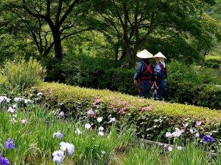 """Les """"musume iris"""" en chemin pour travailler"""