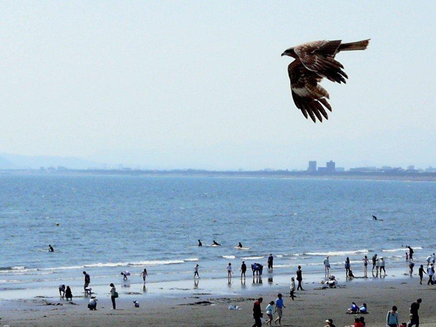 Здесь много ястребов, летающих над пляжем недалеко от Эносимы