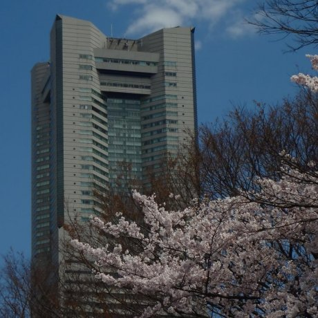 Yokohama Kamon-yama Park