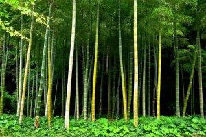 Une petite forêt de bambous dans l'obscurité