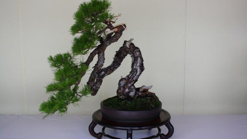 Bonsai Suiseki At Meiji Shrine 2021 June Events In Tokyo Japan Travel