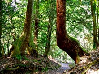 時空の隙間に歪む木々!