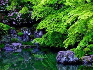 La rive opposée de l'étang dans le jardin