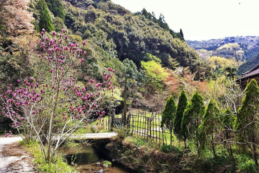 Some of the scenery at the base of Wakamiya Onsen