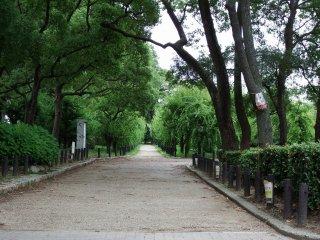 Ketika Anda memasuki Gerbang Aoyamon dan memandang ke arah kiri, Anda akan menemukan sebuah hutan prem kecil. Pohon prem akan mekar penuh dari akhir Januari hingga awal Februari.