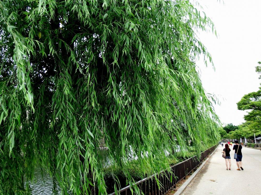 Sekarang Anda berada di Luar Parit Timur. Ada pohon willow hijau di sana-sini dan orang-orang berjalan di sepanjang parit untuk menikmati pemandangan indah dari pepohonan, air hijau tua, dan dinding-dinding batu.