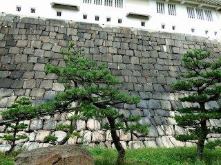 Khi bạn bước vào 'Cánh cổng Shikirimon' được làm bằng những bức tường đá, bạn có thể nhìn thấy mặt bên của tháp chính. Hành lang được trang trí bằng những cây thông xinh đẹp