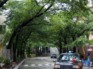 Лампы такси, блестящие дороги и навес из деревьев в центре Токио в дождливый день